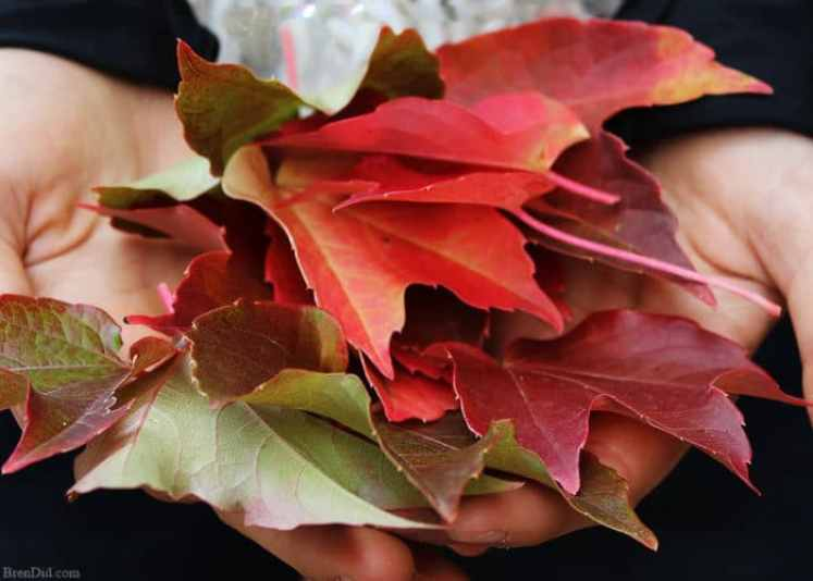 Pressed fall leaves made into a lovely and frugal front door wreath. Learn a quick and easy method to preserve fall leaves and make this simple wreath today!