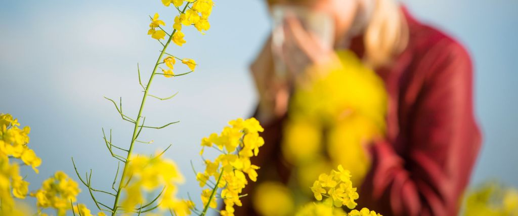 How to treat Hayfever & Allergies | Brennans Pharmacy | Creeslough | Buncrana | Clonmay | Glenageary