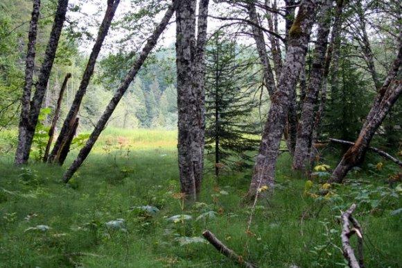 Meadow at Longmire