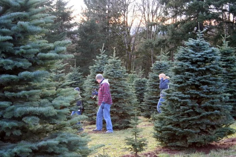 Searching - We're hunting the elusive best tree.