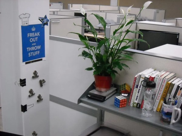 Peace flag plant