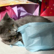 Hazel enjoys birthday bags and crepe paper
