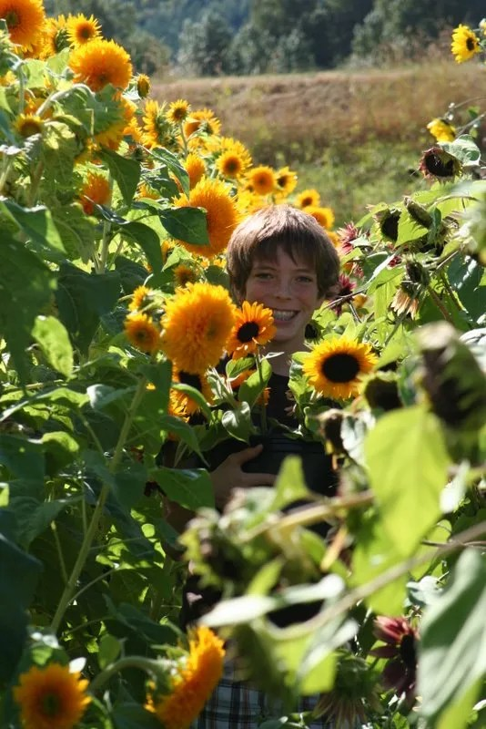 Jamison holding the bucket of sunflowers in the field
