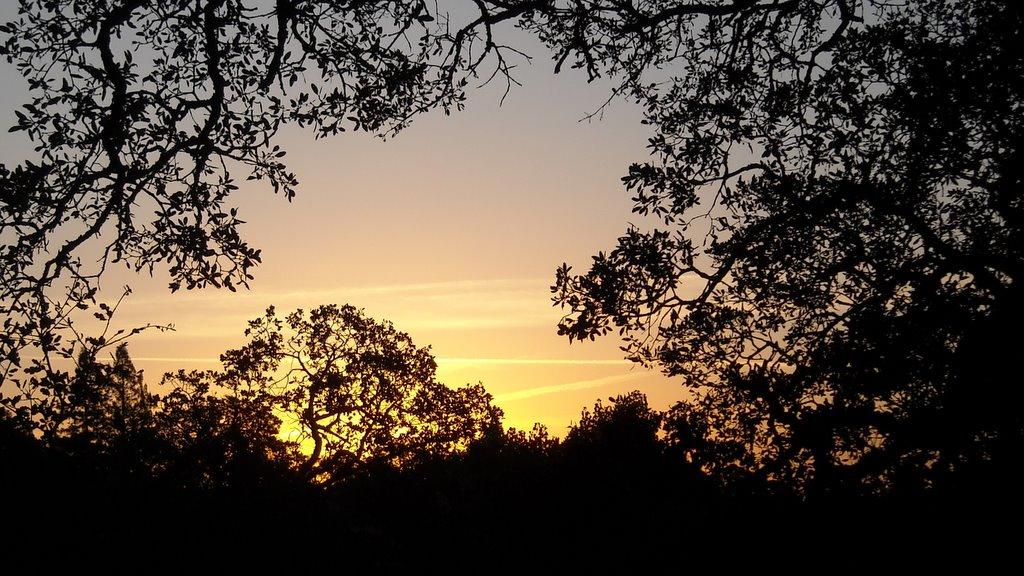 Good Morning, Fair Oaks