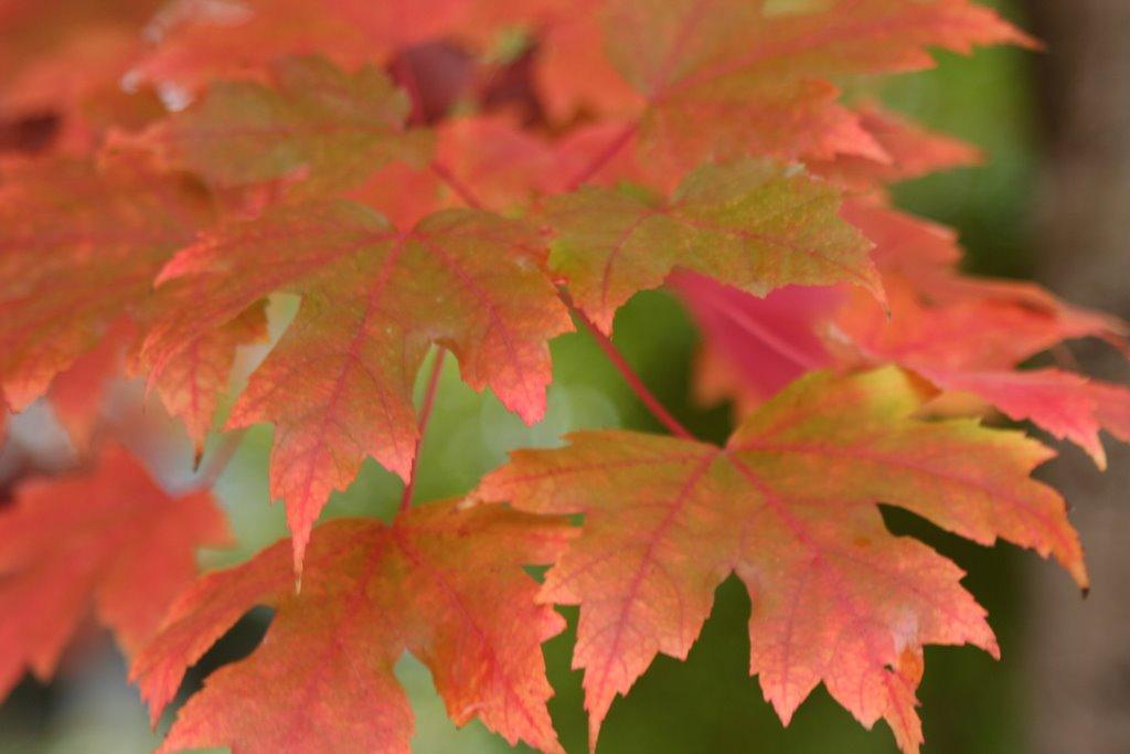 Fall Leaves Photowalk