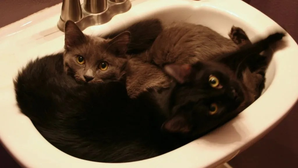 Hazel and Ginger in the sink