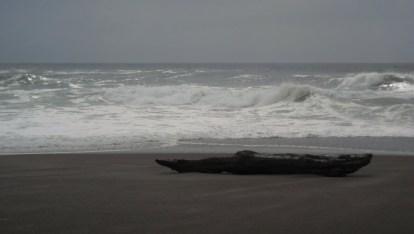 Log and sea