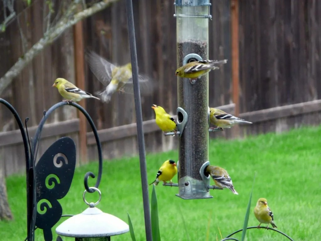 Birds at our Feeders