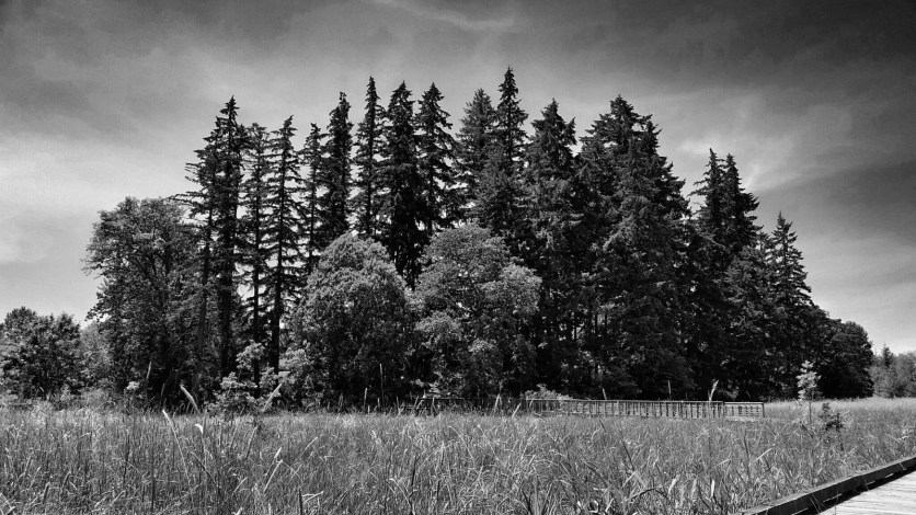 bw stand tall in june