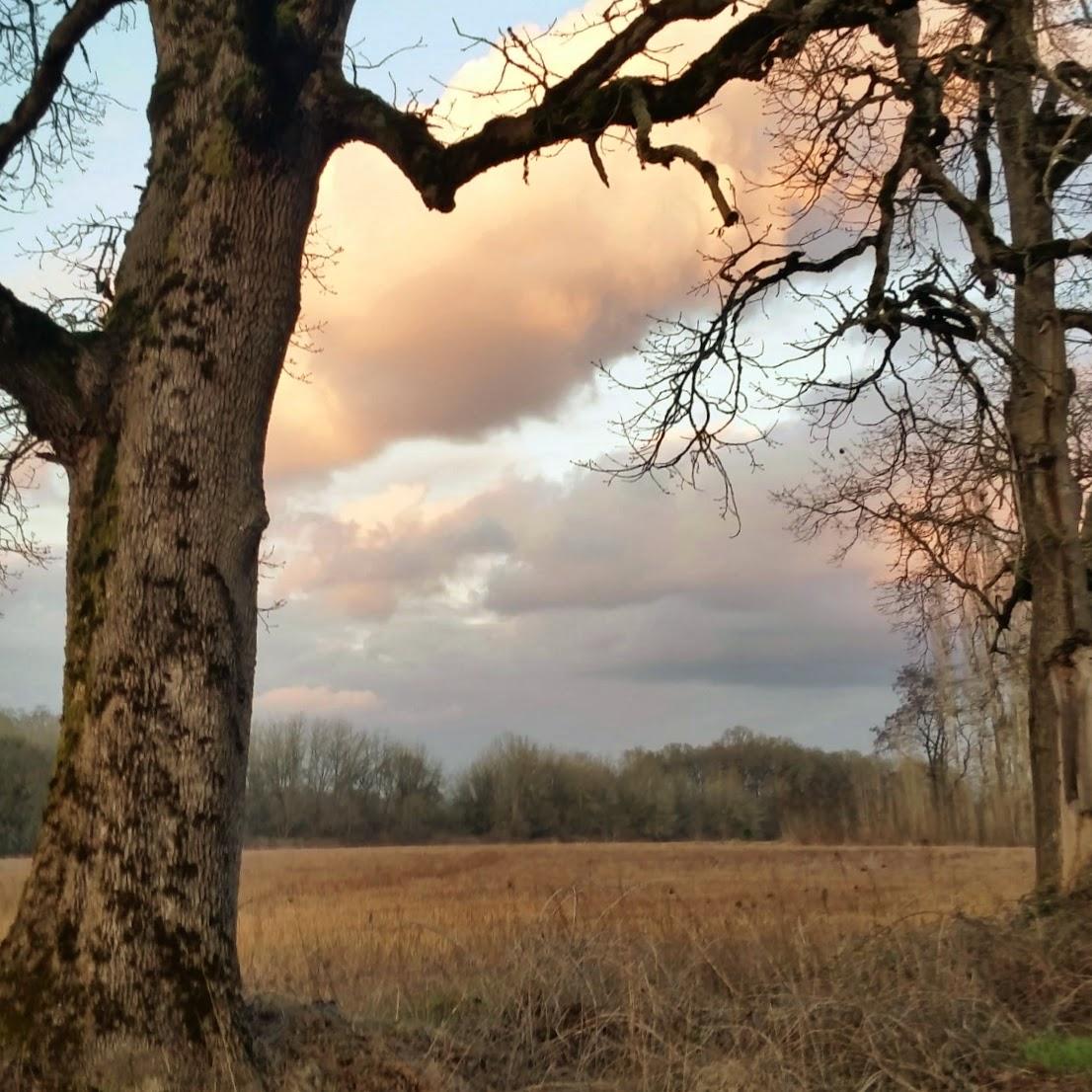 Oak Field