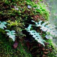 Ferns on a tree
