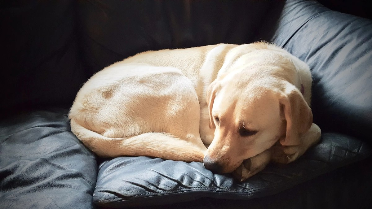 Curled up on the couch