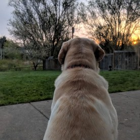 Watching the sun rise