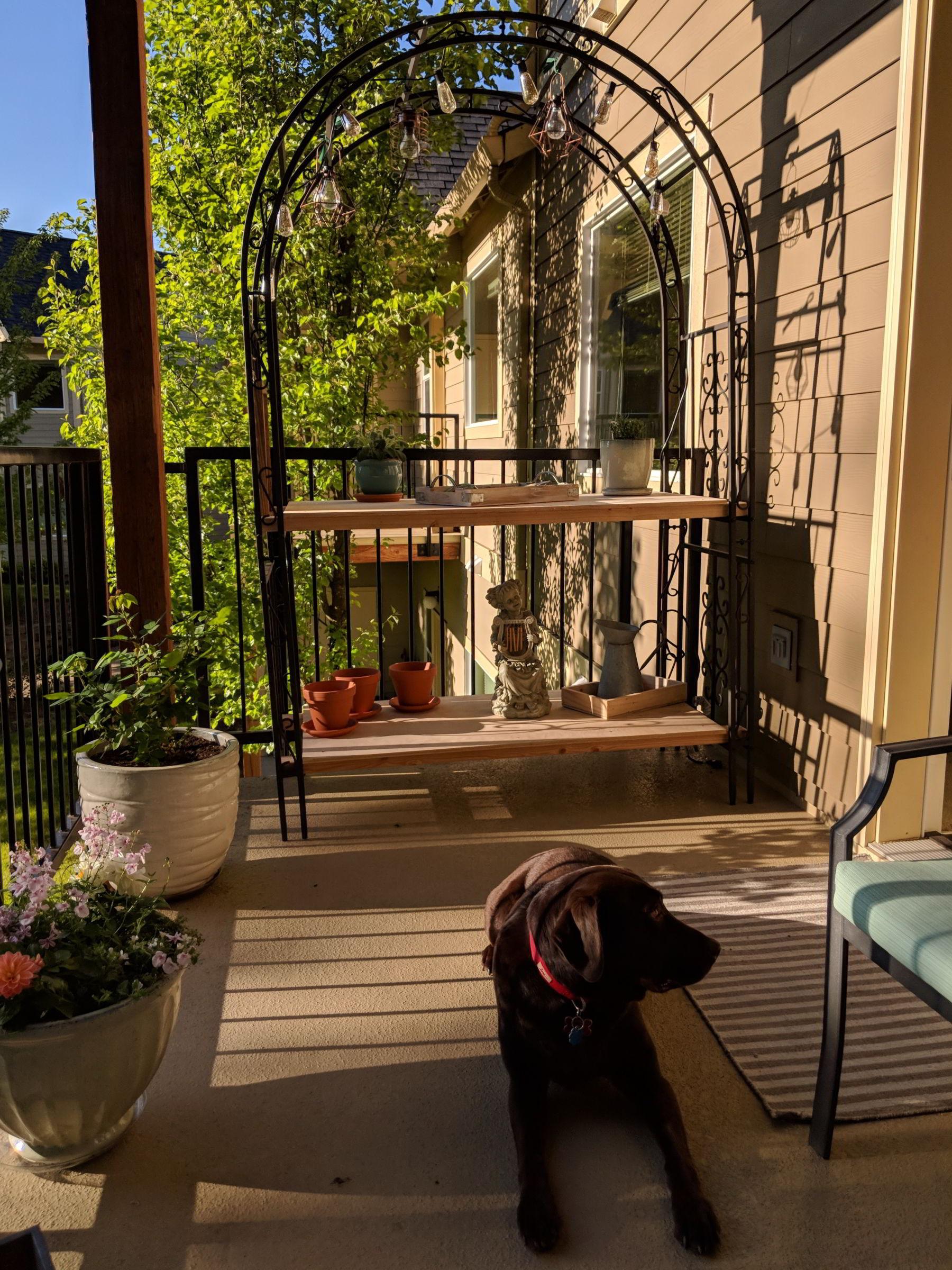Corvallis deck -- Mousse approves