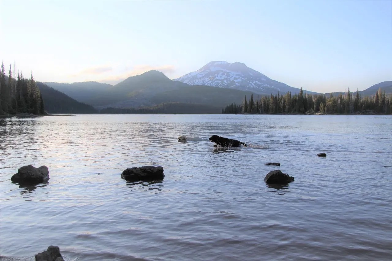 Mousse and Gilligan play and swim in Sparks Lake