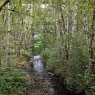 Mendenhall Creek going under Buxton Trestle