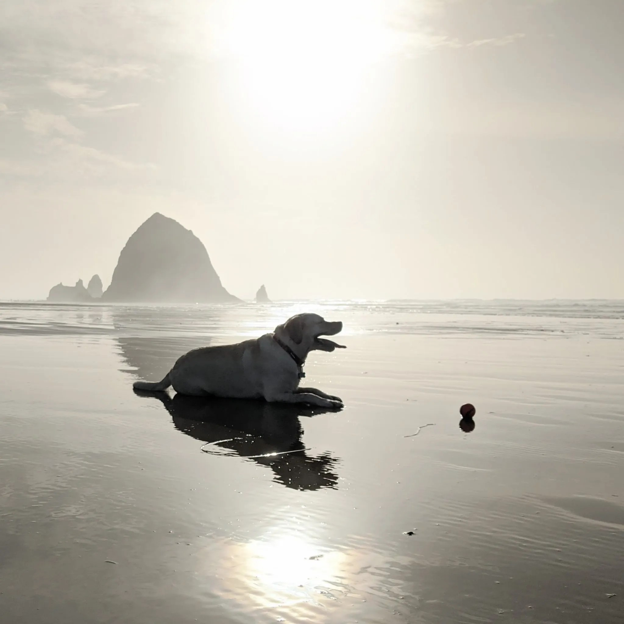 Gilligan on Cannon Beach with Haystack Rock in the distance