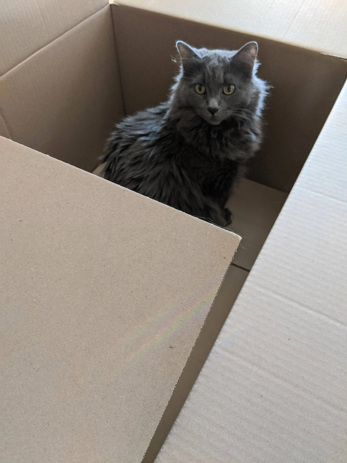 Hazel in a box