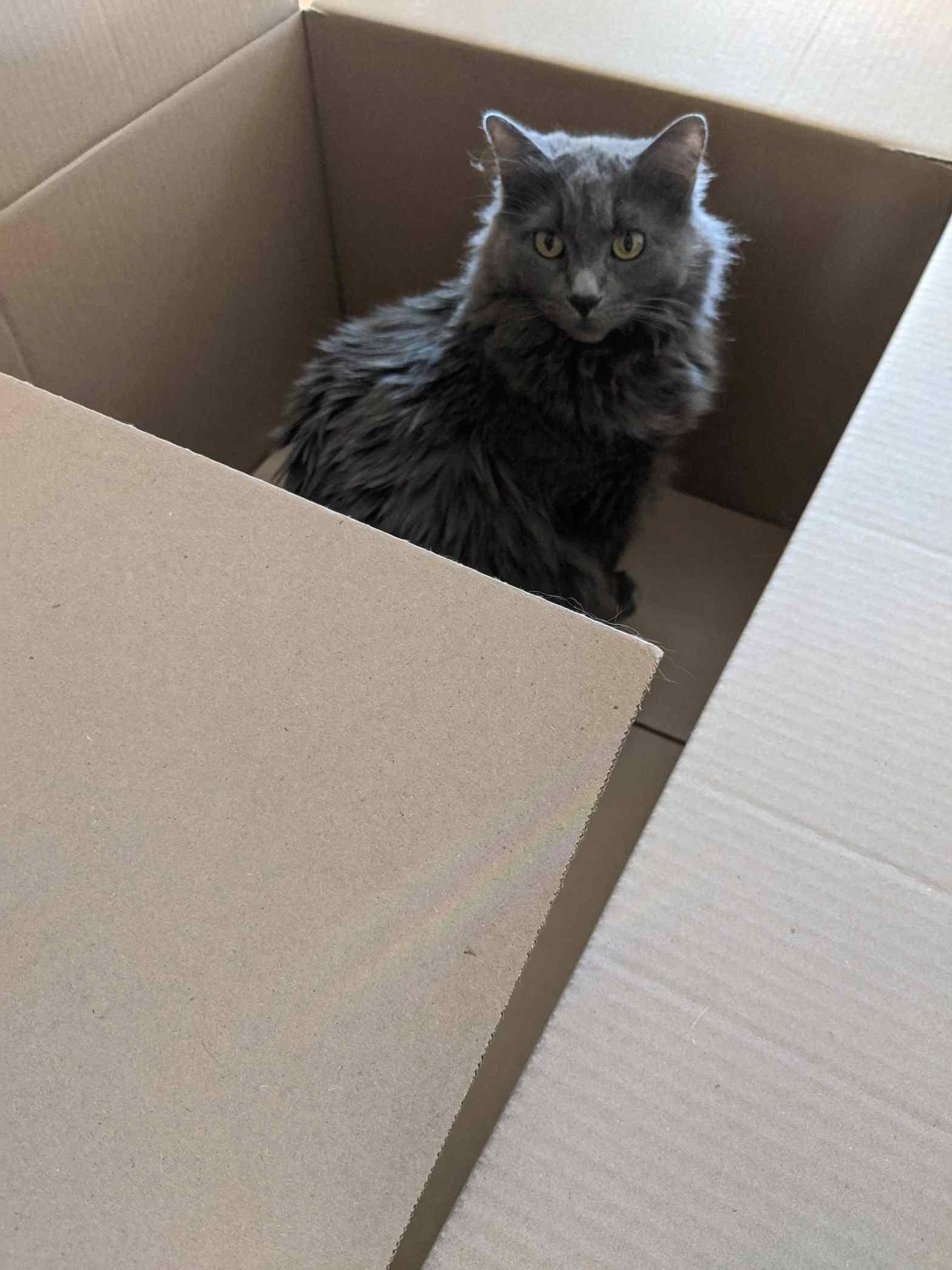 Hazel in a box