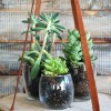 November DIY Challenge :: Hanging Wood Slice Plant Stand