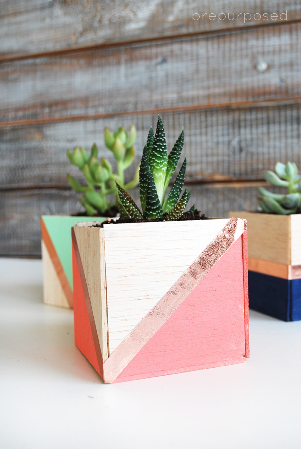 tutorial to make mini succulent planters