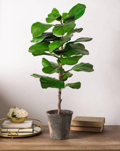 tabletop faux fiddle leaf fig