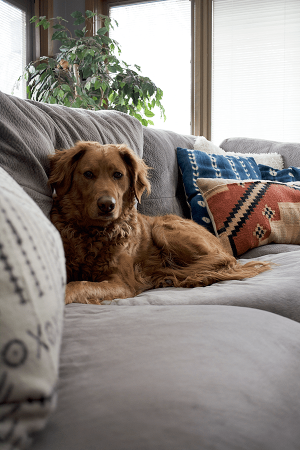 spring cleaning, pet hair, dog hair, living room