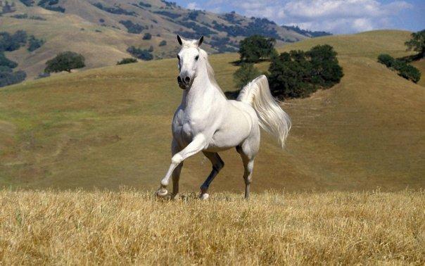 running-horse_109491-1440x900