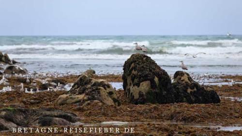 Individualreise Vogelbeobachtung Bretagne