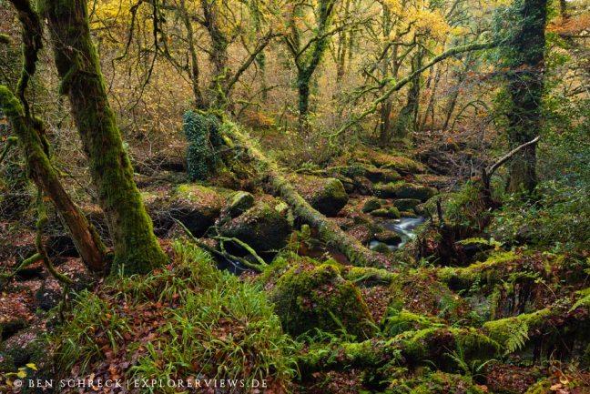 Märchenwald Bretagne