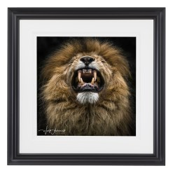 Wolf Ademeit Animal Black and White Fine Art Photography Portrait Zoo Animals Photographer Fine art photography for sale, Brett Gallery, art for home, corporate art, large format photography, Wildlife photography Lion