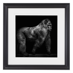 Wolf Ademeit Animal Black and White Fine Art Photography Portrait Zoo Animals Photographer Fine art photography for sale, Brett Gallery, art for home, corporate art, large format photography, Wildlife photography Monkey