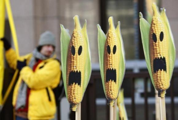 BT Corn KILLS!