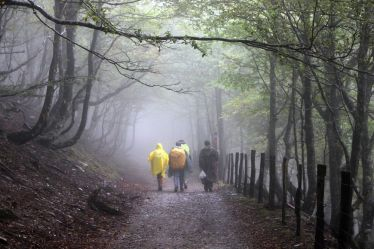 Pilgrims walk through beech woodland, Col de Bentartea