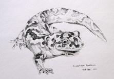 Pacific Giant Salamander (2012)