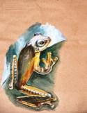 Rhacoporus pardalis