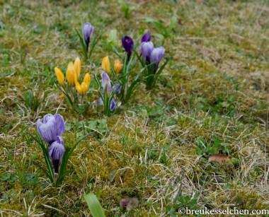 Frühlingsboten (8)