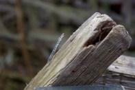 Viel altes Holz und viele Nägel gilt es zu entdecken.