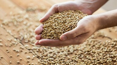 Grains being held in the palm of the hands.