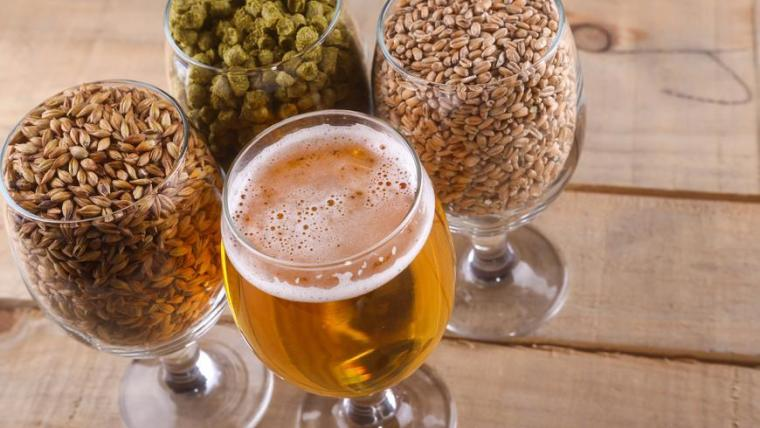 Glasses of hops, grains and beer