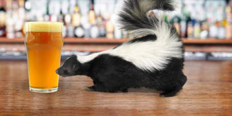 A glass of beer and a skunk.
