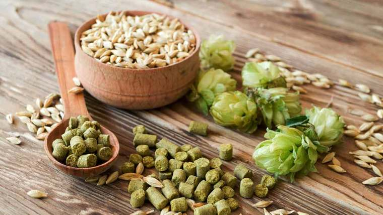 Fresh hop flowers, and pelletized hops in a wooden spoon with a bowl of grains