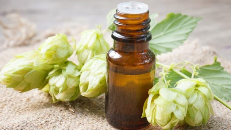 Hop flowers and a small brown bottle of hop oil.