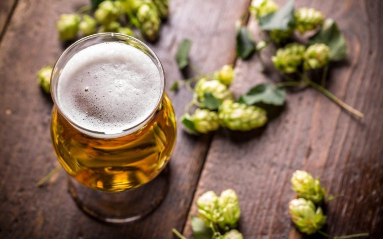 A glass of IPA beer with some hop flowers.