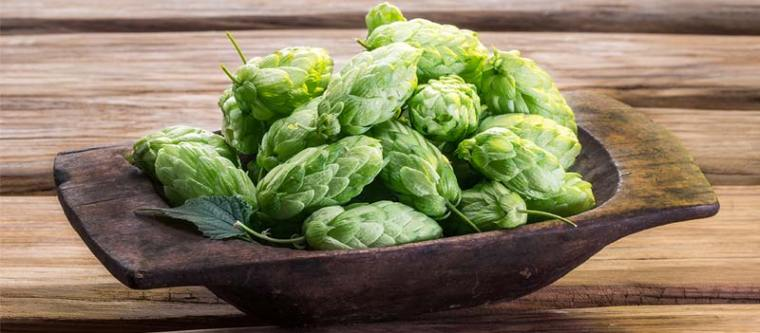 A wooden bowl of hop flowers.
