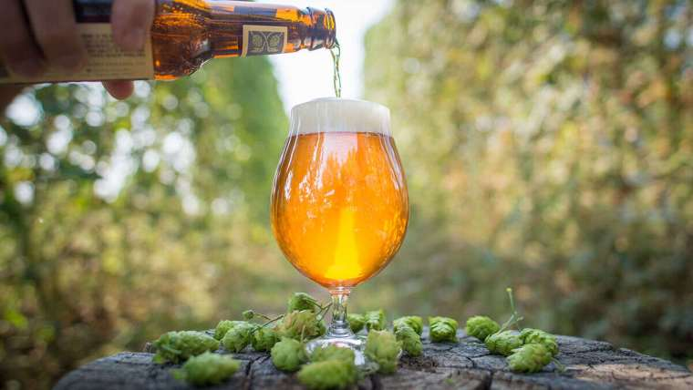 Beer being poured from a bottle into a glass surrounded by hop flowers in the middle of the forest.