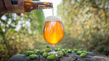 Beer being poured from a bottle to a glass surrounded by hop flowers in the middle of the forest.