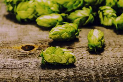 Fresh hops ready for homebrewing on a table.