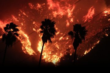 Thomas fire burns behind palm trees.