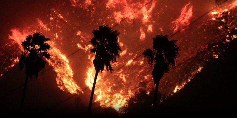 Thomas fire burns behind palm trees.